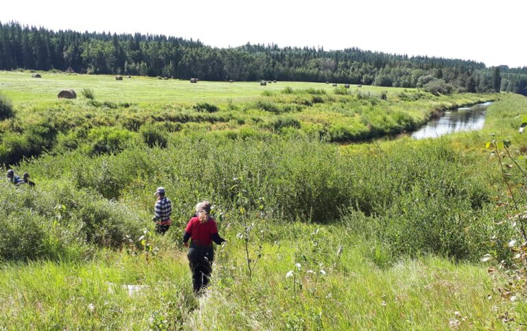 Riparian Learning in Action at New Boulder Lake Conservation Site